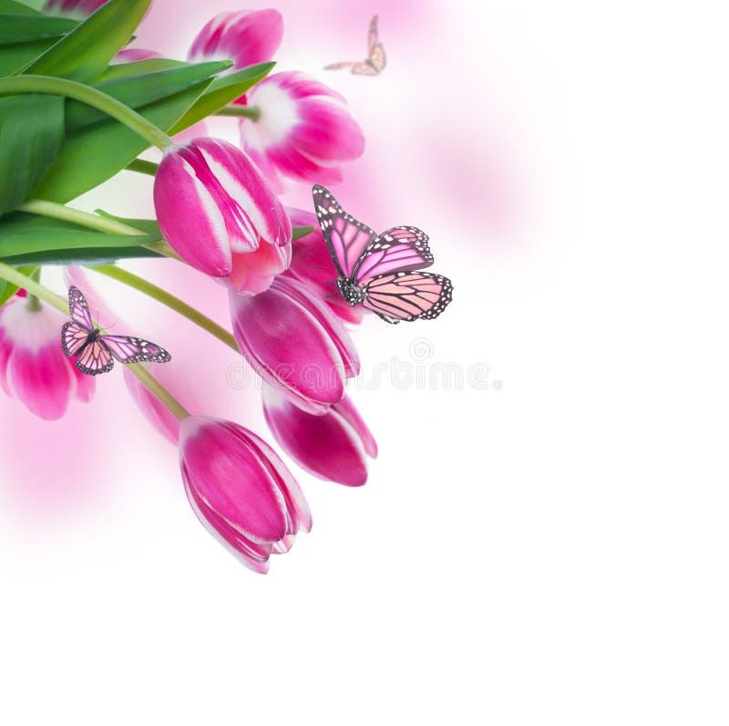 与绿草的郁金香。 免版税图库摄影