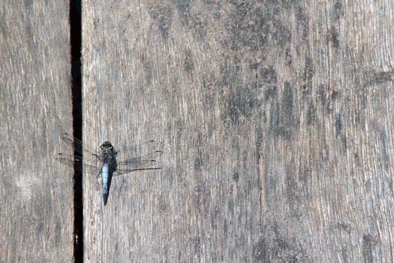 与蜻蜓的木桌 免版税库存照片