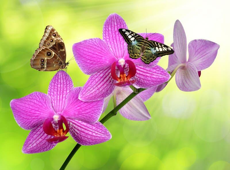 与蝴蝶的紫色兰花 免版税图库摄影