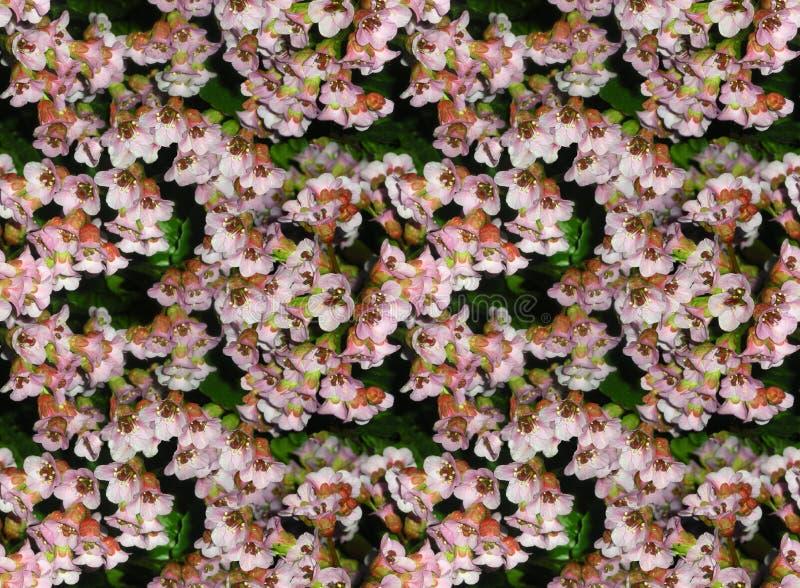 与badana花的无缝的照片背景  在粉色的花卉自然样式 库存照片