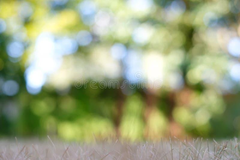 与bokeh的夏天抽象背景 在foregrou的干草 免版税库存图片