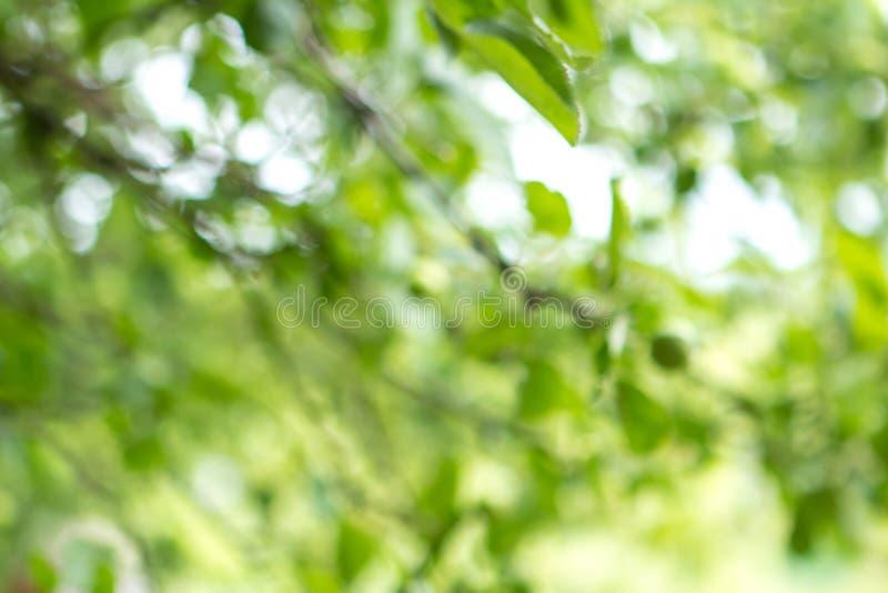 与bokeh,自然纹理的被弄脏的绿色树叶子背景 免版税库存照片