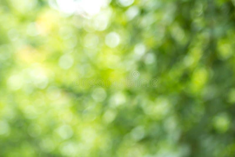 与bokeh,自然纹理的被弄脏的绿色树叶子背景 图库摄影