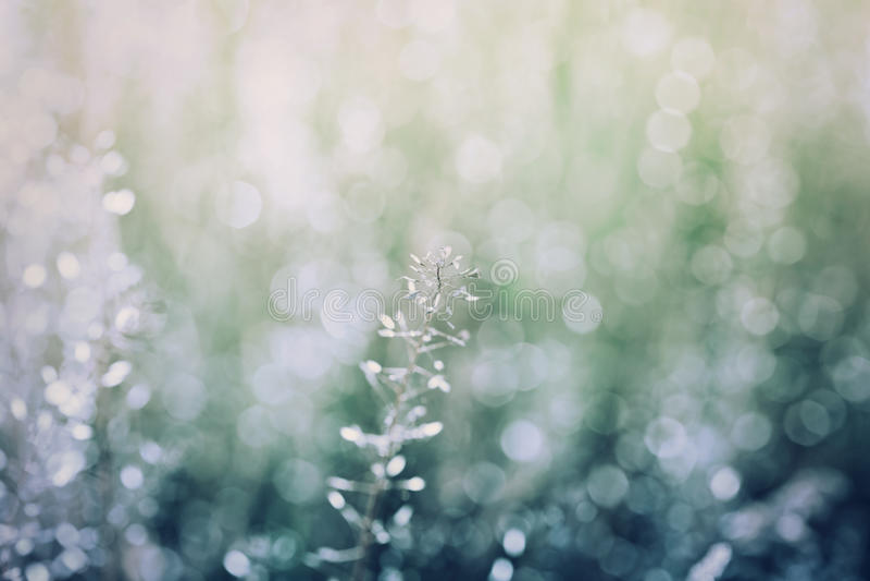 与bokeh,葡萄酒蓝色和绿色,自然纹理,夏天草甸,微明的抽象自然本底 库存照片