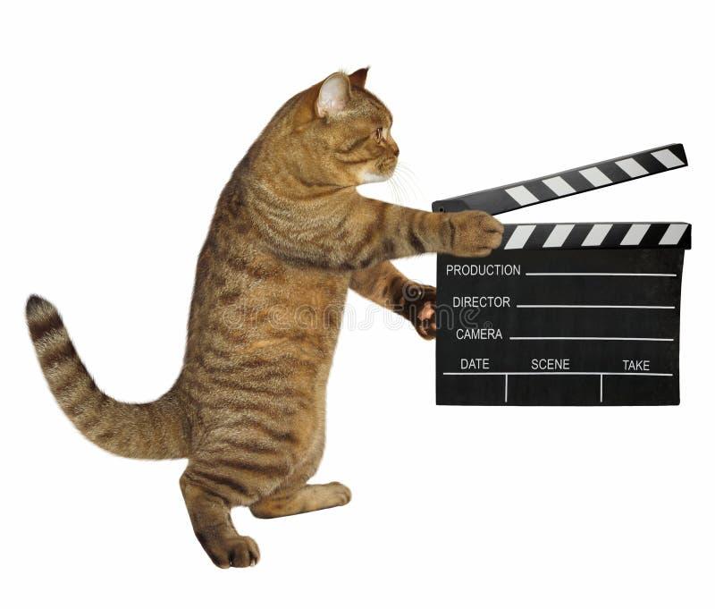 与clapperboard的猫 库存照片