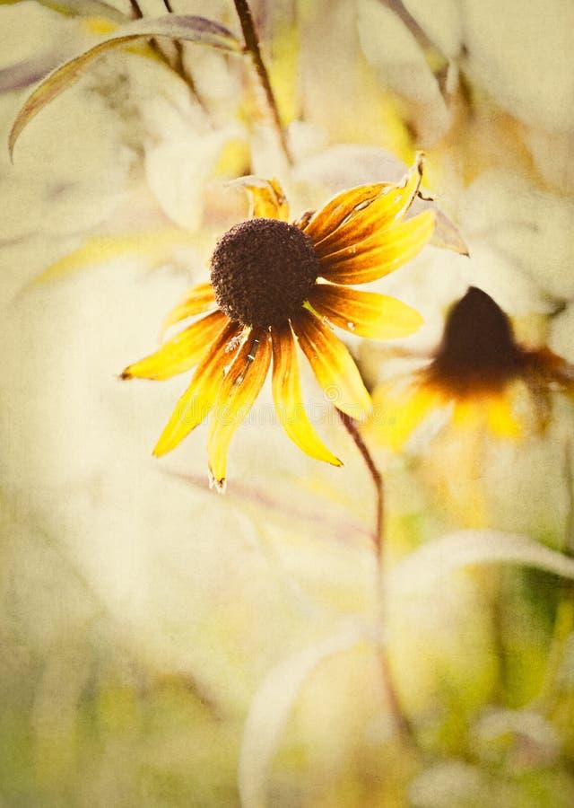 与Coneflower的宏观织地不很细花卉背景 免版税库存照片