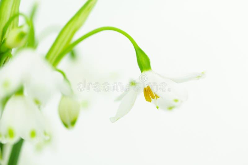 与copyspace的白色春天花 免版税库存照片