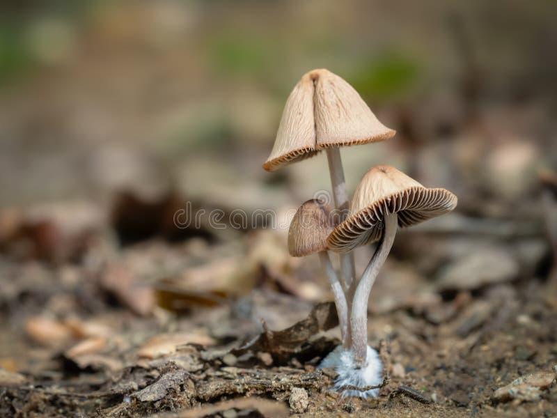 与copyspace的逗人喜爱的伞菌家庭小组 自然宏指令 库存照片