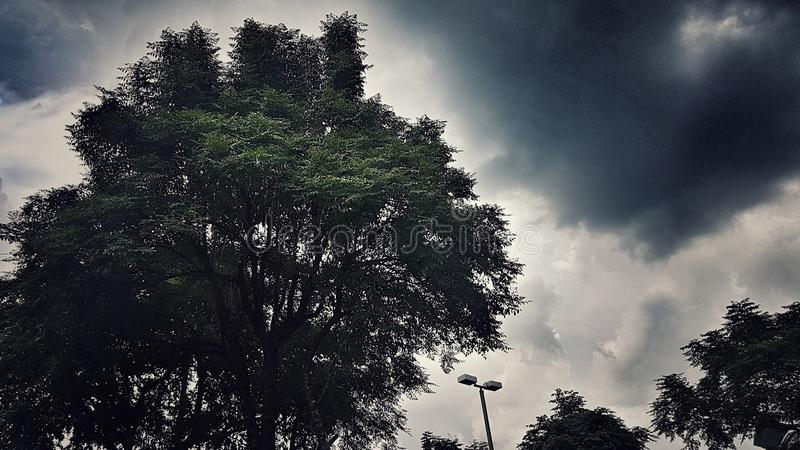 与datk天空的亮光树 免版税库存图片