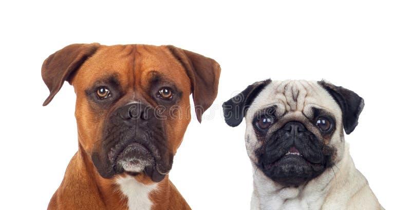 与differentes大小的相似的狗 免版税库存图片