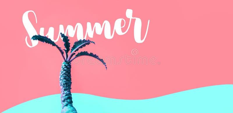 与Dorstenia仙人掌的异乎寻常的颜色的夏天概念在五颜六色的 免版税图库摄影