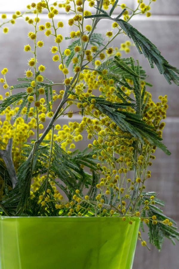 与flowersand绿色的含羞草早午餐在绿色花瓶离开 在绿色花盆的黄色花 开花概念 免版税图库摄影