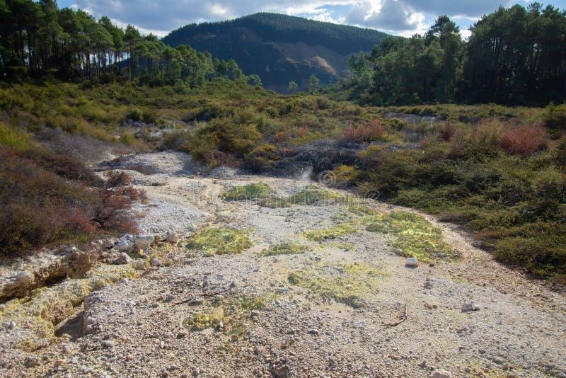 与geathermal热的地面结合的自然在新西兰 图库摄影