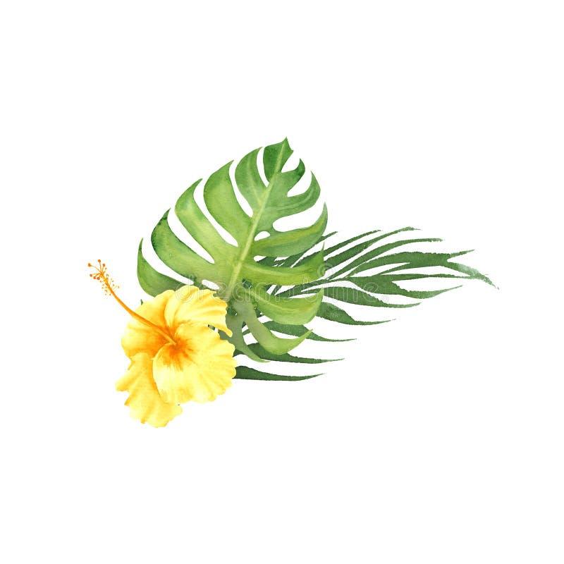 与monstera叶子和木槿花的水彩热带花束 皇族释放例证