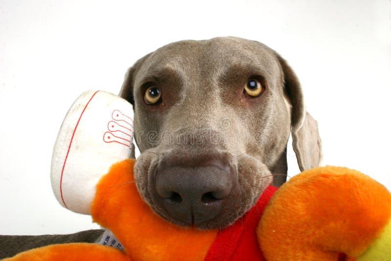 与moppet关闭的狗 免版税库存图片