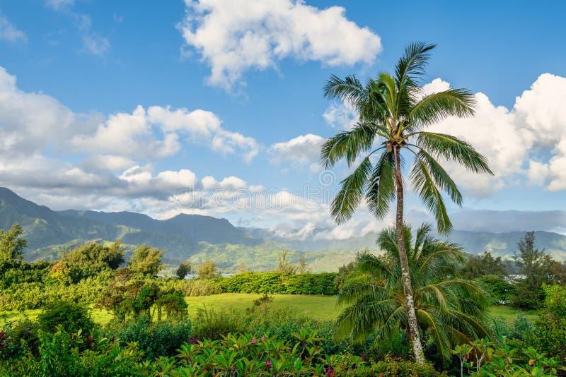与Na梵语海岸的棕榈树在背景中 免版税库存照片