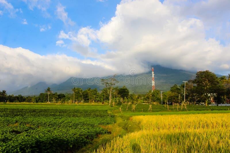 与padi领域的风景美丽的山 库存图片