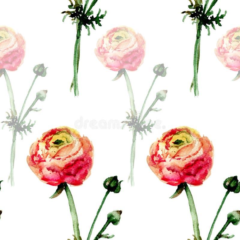 与Ranonkel花的无缝的花卉样式 向量例证