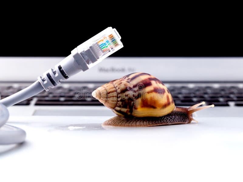 与rj45连接器符号照片的蜗牛慢互联网的 免版税库存照片