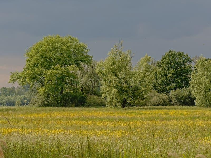 与rtrees的豪华的绿色沼泽风景在佛兰芒乡下 免版税库存图片
