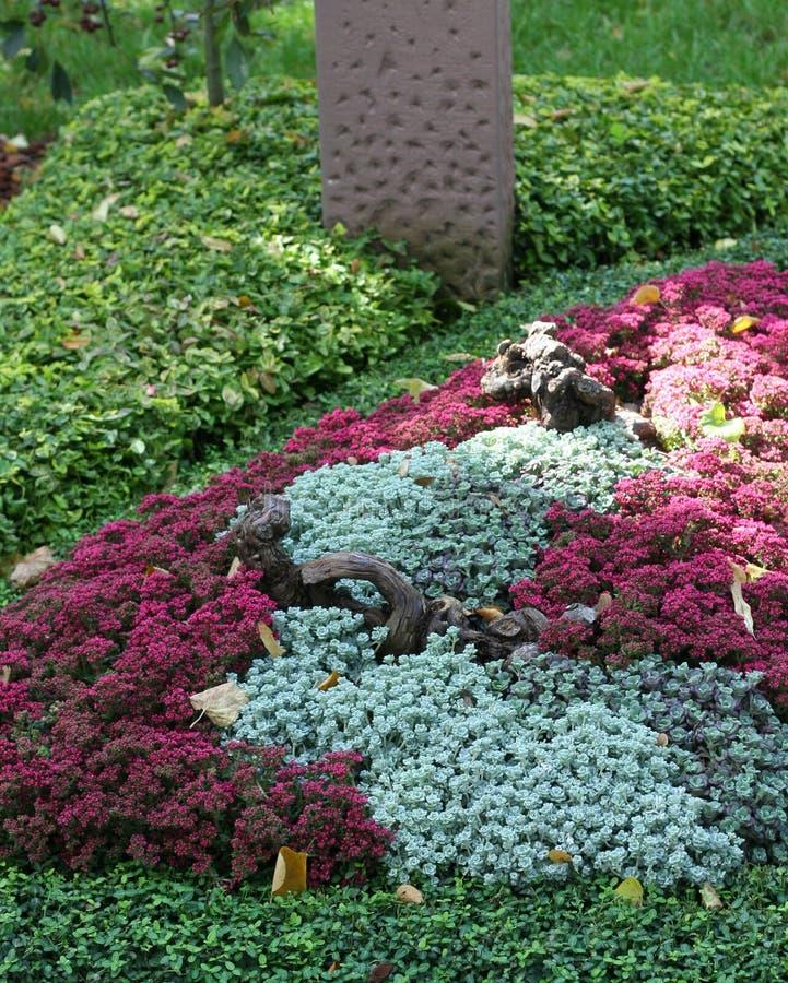 与sedum多年生植物的哀悼的坟墓在秋天 免版税库存图片