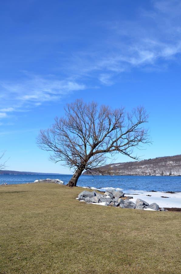 与Seneca湖的树剪影在冬天背景中 库存图片