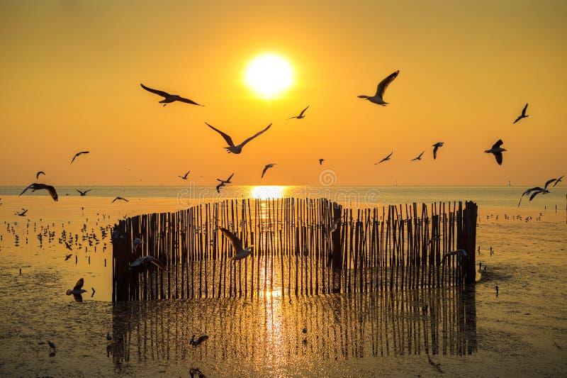 与silhoutte的日落鸟飞行 免版税库存图片