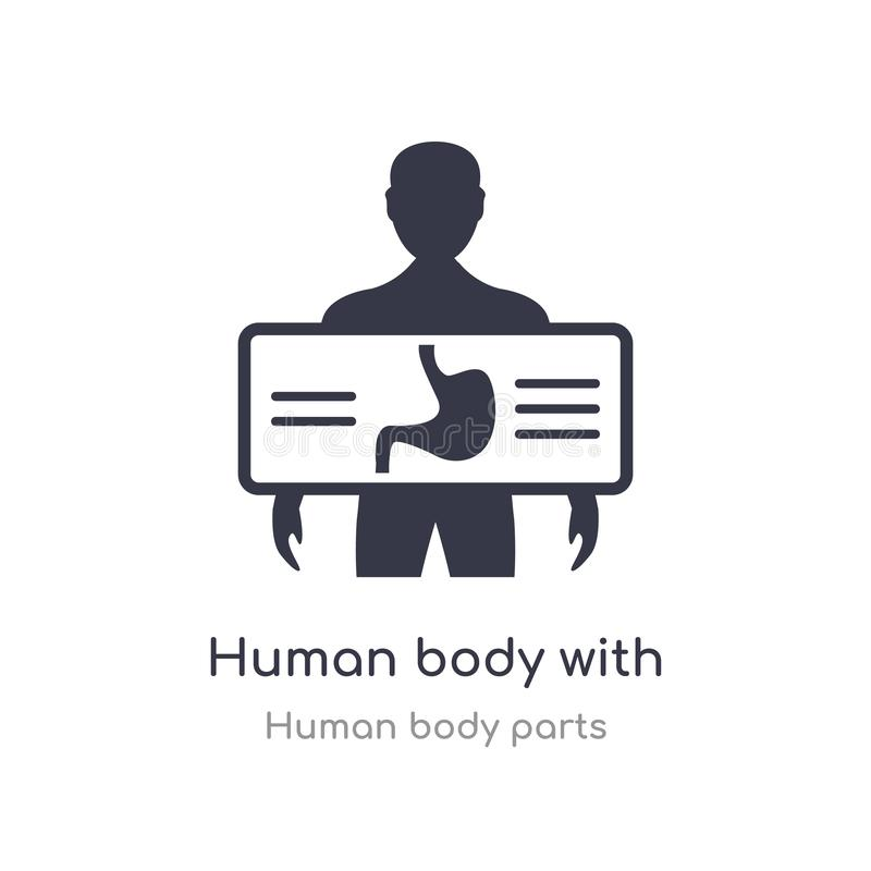 与x集中于胃概述象的光芒板材的人体 r 向量例证