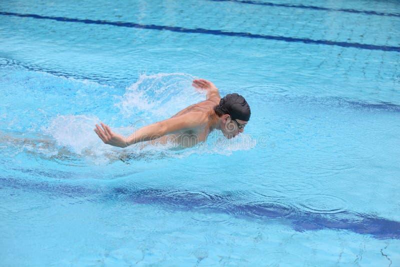 专业游泳者游泳海豚样式 库存照片