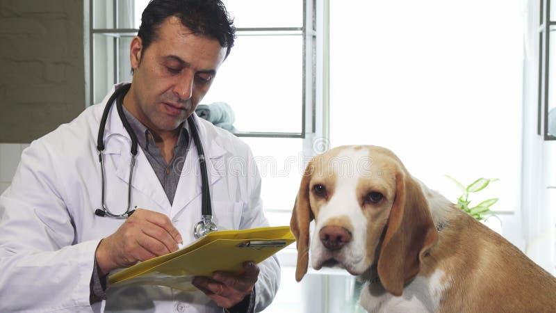 专业狩医填装的纸在审查和可爱的小猎犬小狗以后 库存照片