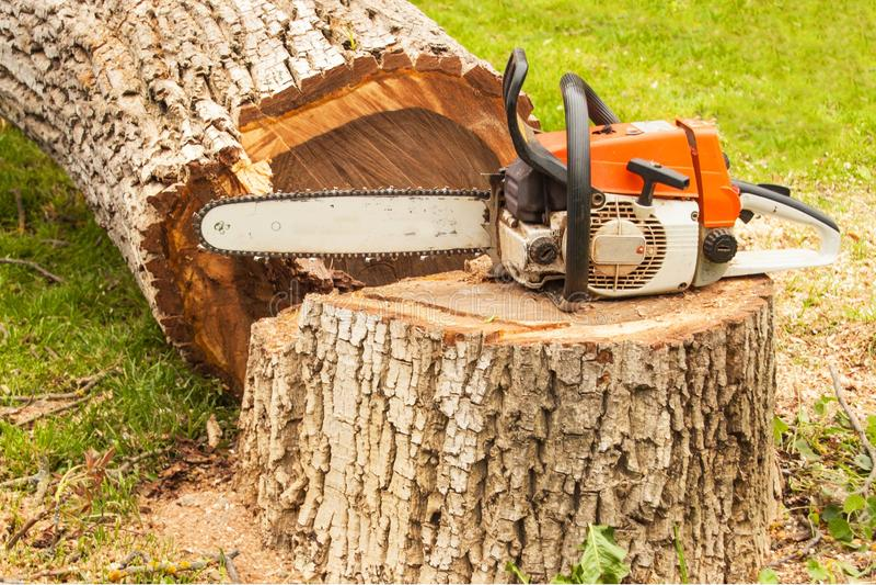 专业锯在核桃树 汽油在击倒的树看见了 免版税库存照片