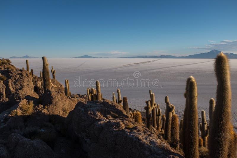 世界最大的盐平的玻利维亚,南美洲从独特的仙人掌海岛看见的乌尤尼盐沼叫印加瓦西峰 免版税库存照片