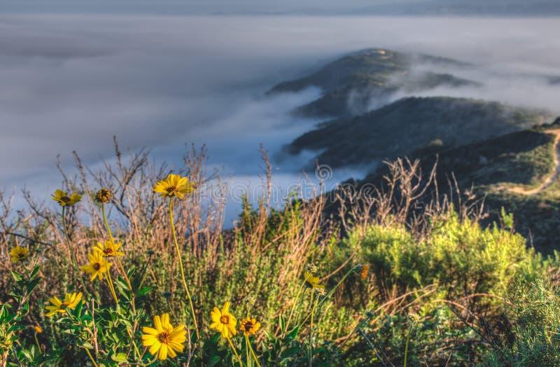 世界有雾的小山的上面 图库摄影