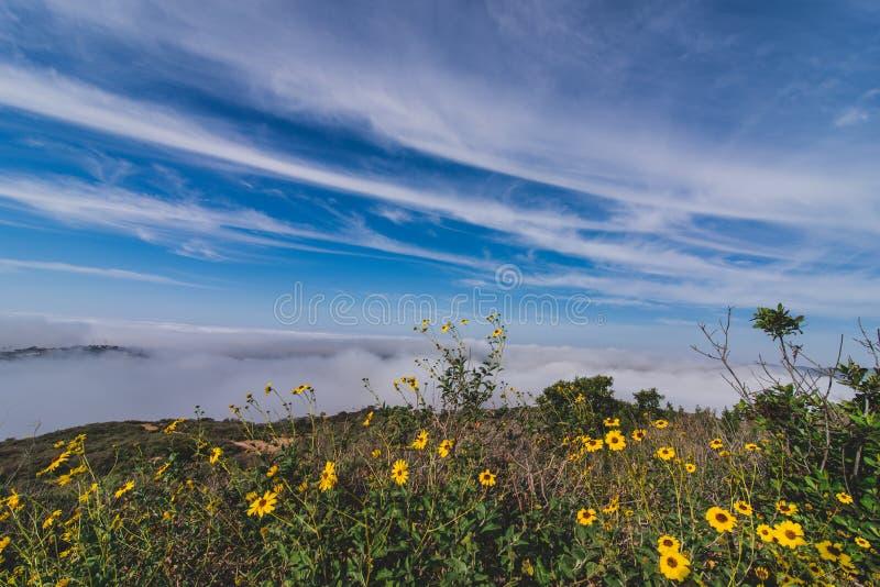 世界有雾的小山的上面 免版税图库摄影