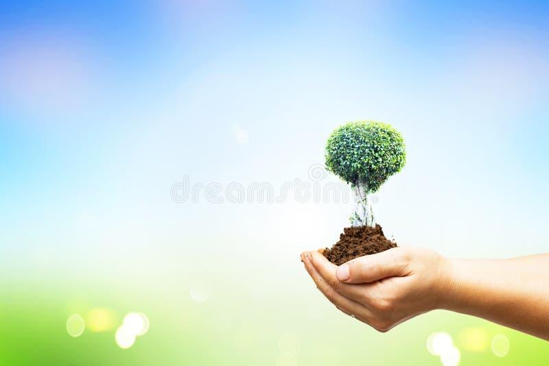 世界环境日概念:拿着在绿色森林背景的人的手大树 免版税库存图片