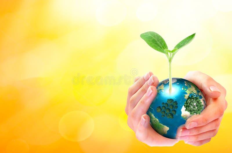 世界环境日概念:拿着大成长树和地球地球在晴朗的黄色春天背景的人的手 库存照片