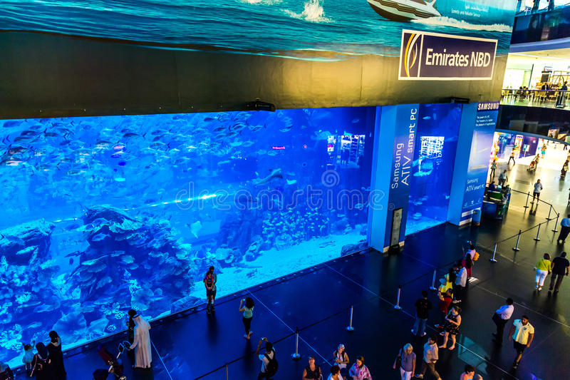 世界的最大的水族馆在迪拜购物中心的 免版税库存图片