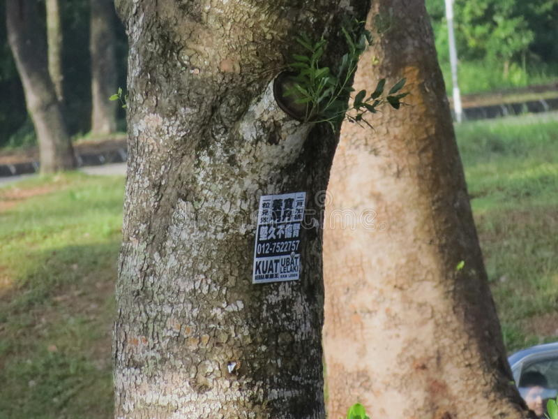 世界结构树 免版税库存图片