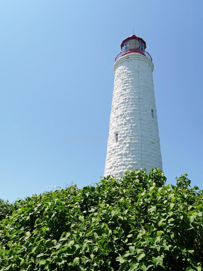 世纪灯塔第十九植被 库存照片