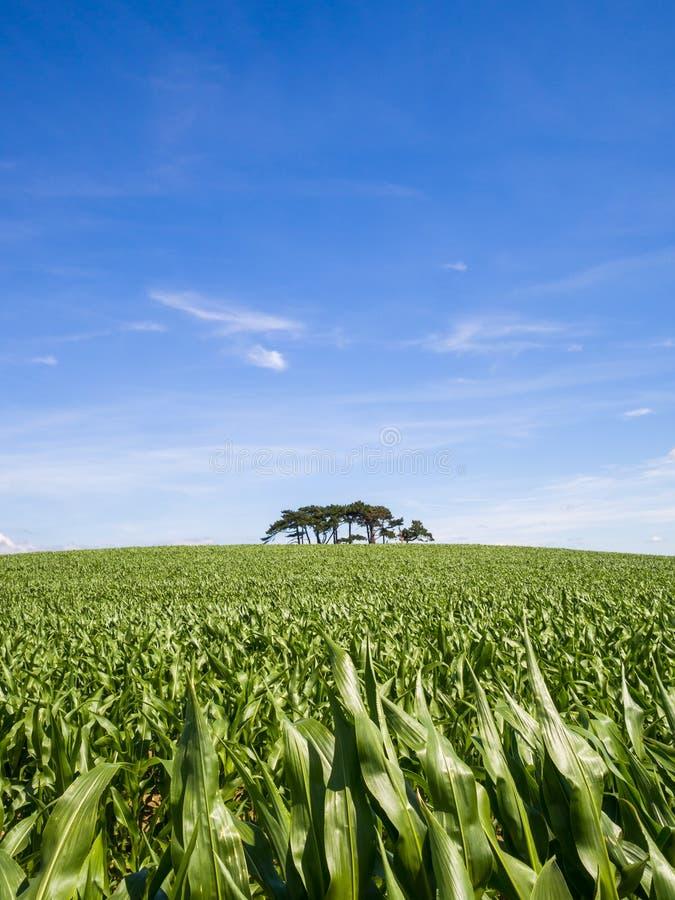 丛在小山的树 免版税图库摄影