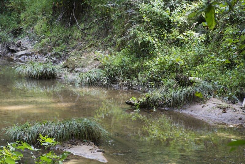 丛在小河的草 免版税库存照片