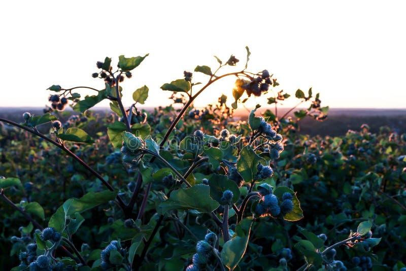丛生在日落的特写镜头 免版税库存照片