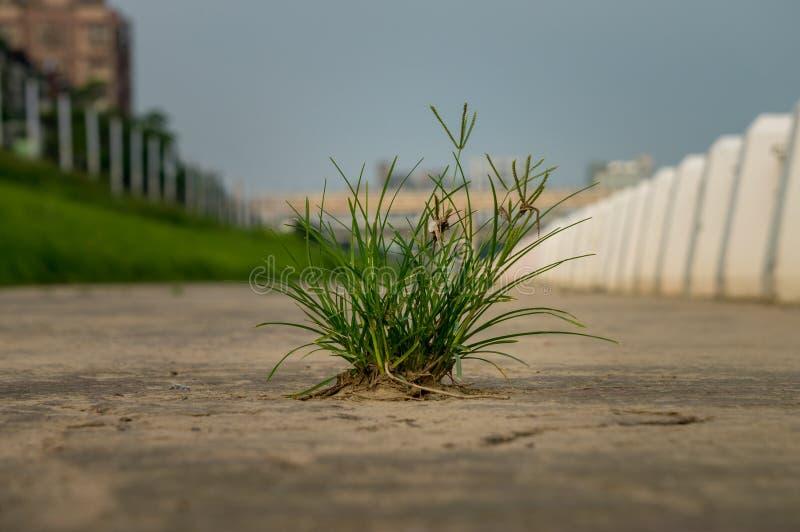 丛白色柱子围拢的棕色表面上的草和 免版税库存图片