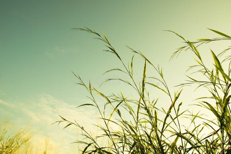 丛草和天空葡萄酒过滤样式 库存图片