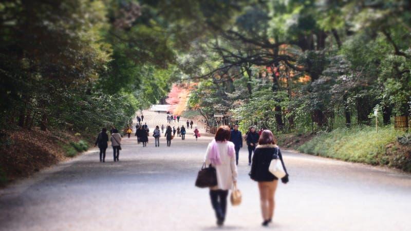 东京公园步行 免版税库存照片