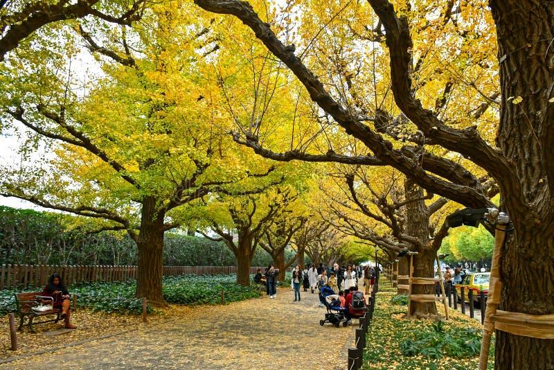 东京的在晚秋天期间的美济礁神功皇后Gaien大道 库存照片