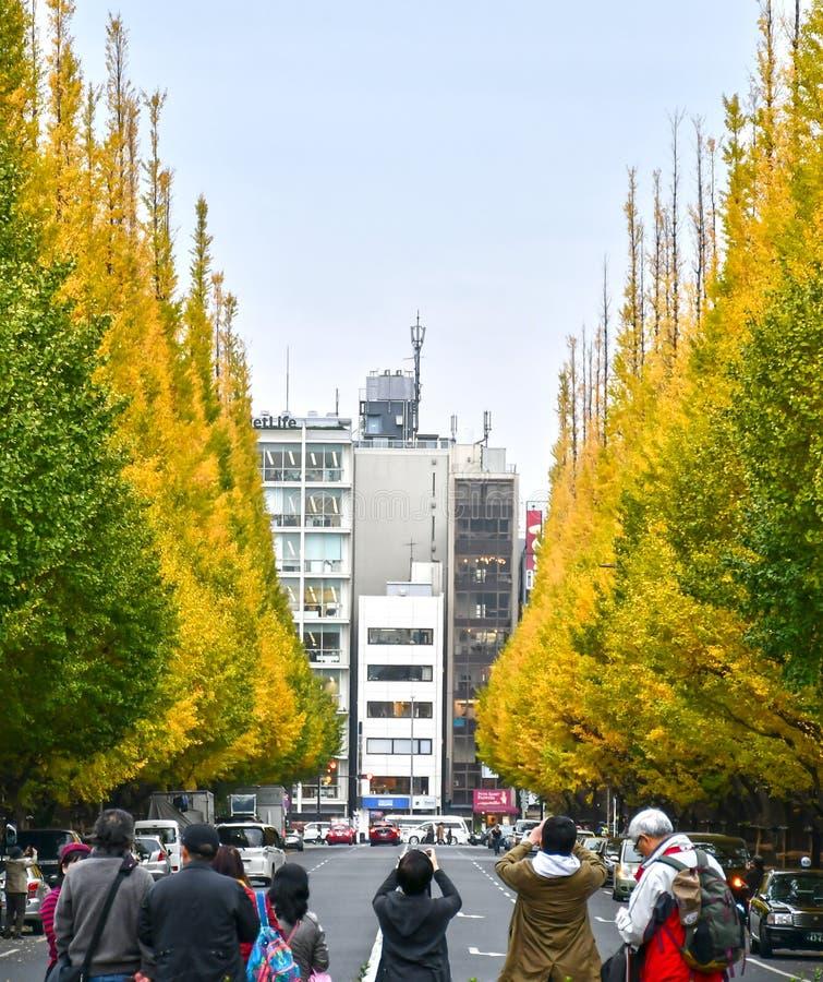 东京的在晚秋天期间的美济礁神功皇后Gaien大道 免版税库存图片