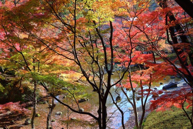 东京秋叶 免版税图库摄影