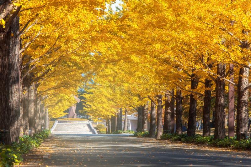 东京,日本秋天公园在日本 库存照片