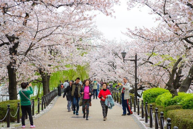 东京,日本- 2015年4月3日:享受樱花节日的东京人群在上野公园 免版税库存图片